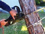 Зріз дерев